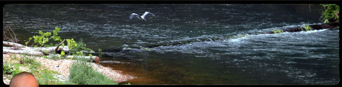 Image of a river with birds flying over a small waterfall.